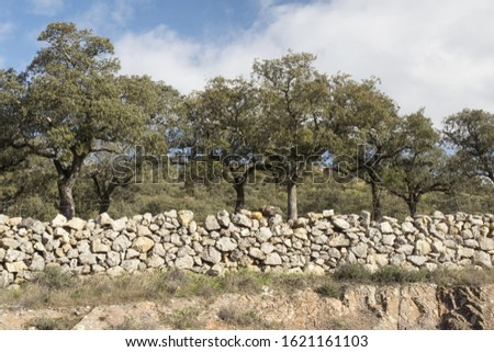 The stone walls are used in the cattle and pig farms of the oaks of oaks and cork oaks of Andalusia to prevent the animals from escaping natural light #1621161103