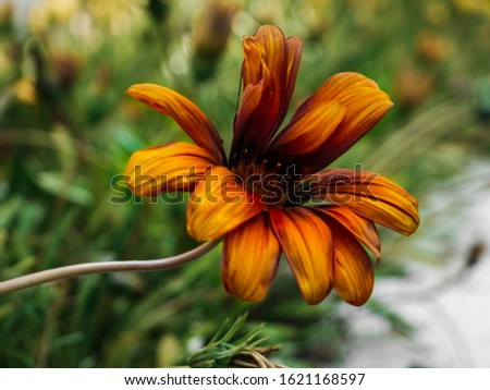 An orange flower pop out the image in a homemade garden. #1621168597