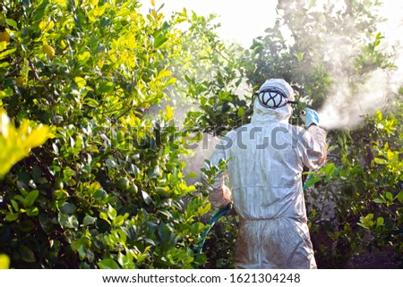 Weed insecticide fumigation. Organic ecological agriculture. Spray pesticides, pesticide on fruit lemon in growing agricultural plantation, spain. Man spraying or fumigating pesti, pest control #1621304248