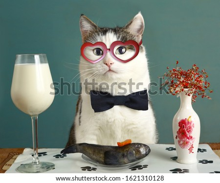 be my valentine card with funny cat in heart eye glasses milk and raw fish