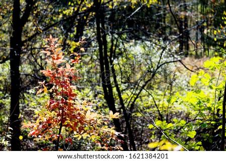 Fall foliage in the autumn season. #1621384201