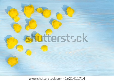 Spring or summer floral background. Floral arrangement with copy space. Yellow flowers on a blue wooden background.