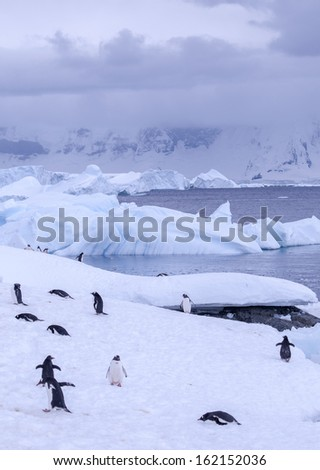 a large group of penguins having fun in the snowy hills of the Antarctic