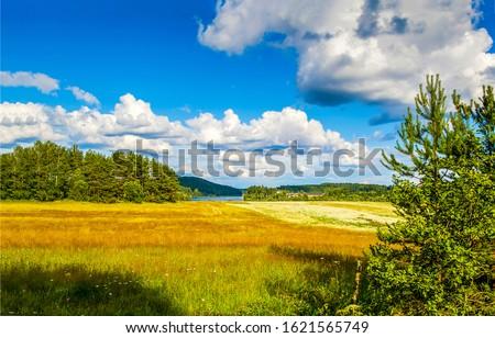 Forest meadow field landscape. Summer forest meadow view. Forest meadow scene #1621565749