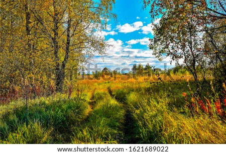 Autumn forest meadow landscape. Forest meadow view. Meadow in autumn forest. Forest meadow in autumn #1621689022