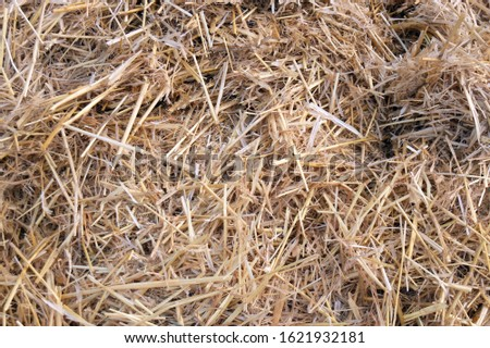 Hay texture. Hay bales are stacked in large stacks. Harvesting in agriculture. #1621932181