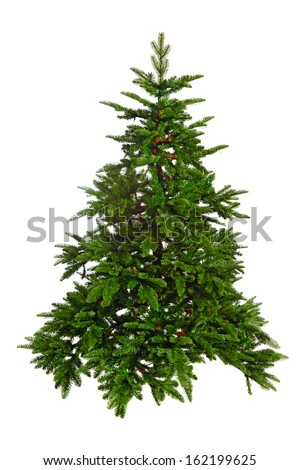 bare Christmas tree  isolated on white background #162199625