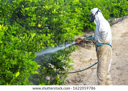Weed insecticide fumigation. Organic ecological agriculture. Spray pesticides, pesticide on fruit lemon in growing agricultural plantation, spain. Man spraying or fumigating pesti, pest control #1622059786