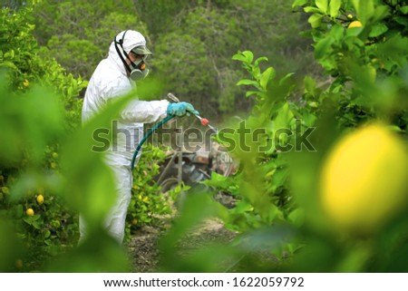 Weed insecticide fumigation. Organic ecological agriculture. Spray pesticides, pesticide on fruit lemon in growing agricultural plantation, spain. Man spraying or fumigating pesti, pest control #1622059792