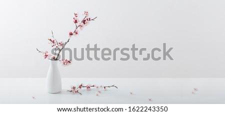 flowering pink cherry branch in  vase on white background #1622243350