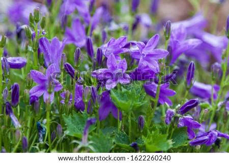 Beautiful blue meadow flowers on meadow. #1622260240