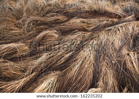autumn dry grass sedge #162235202