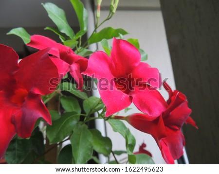 Part of a reddish flower #1622495623