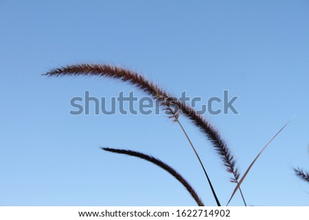 tall feathery plumes of grass 5848 #1622714902