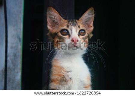 amazing cute adorable kitten #1622720854