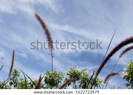 tall feathery plumes of grass 5175 #1622722879