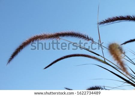 tall feathery plumes of grass 5851 #1622734489