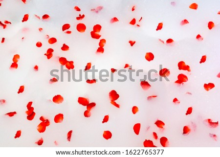 Aromatherapy with flower petals. Bath water with rose petals. Valentine's Day.top view,Red rose petals scattered on the white bath bubble,Jacuzzi tub. #1622765377