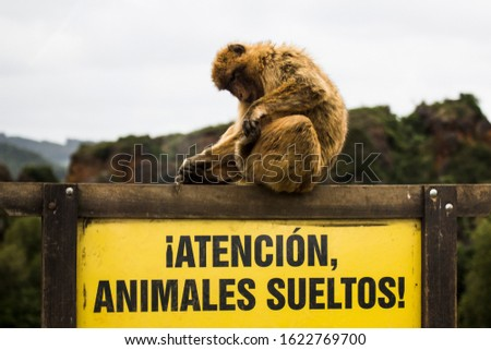 """monkey waiting climbed on top of a pole , poster says! """"!Atencion, animales sueltos¡"""" it translates as """"!Attention, loose animals!"""" #1622769700"""