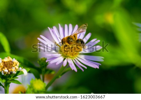 The name Aster comes from the Greek word ἀστήρ, which means the star, which means the shape of the flower head. Varieties are popular as garden plants because of their attractive and vibrant colors #1623003667