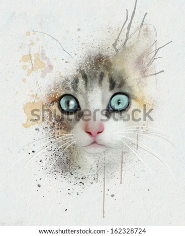 animal collection: Cat