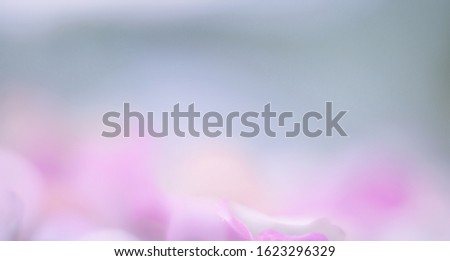 Blurred background with soft, soft colors. This is a photo taken from flowers of nature. #1623296329