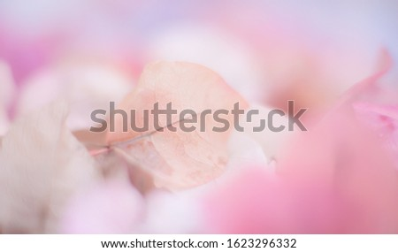 Blurred background with soft, soft colors. This is a photo taken from flowers of nature. #1623296332
