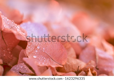 Blurred background with soft, soft colors. This is a photo taken from flowers of nature. #1623296335