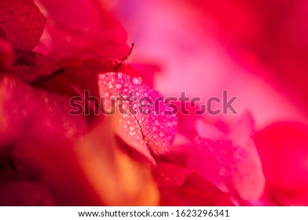 Blurred background with soft, soft colors. This is a photo taken from flowers of nature. #1623296341