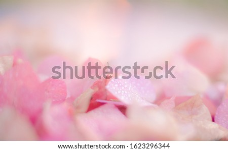 Blurred background with soft, soft colors. This is a photo taken from flowers of nature. #1623296344