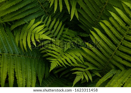 Natural ferns pattern. Beautiful background made with young green fern leaves. Beautiful ferns leaves green foliage. Natural floral fern background in sunlight. #1623311458