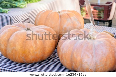 Fresh big pumpking from the field on the table for saling at the market closeup. #1623471685