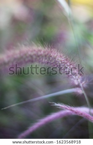 tall feathery plumes of grass 6099 #1623568918