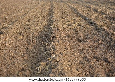 Traditional cultivated land for wheat seeding watering dry black brown soil farming Maharashtra India #1623779533