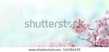 Cherry blossom with soft pastel blue background. Title header dimension image.