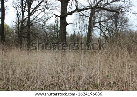 Glade with tall tall grass in the forest #1624196086