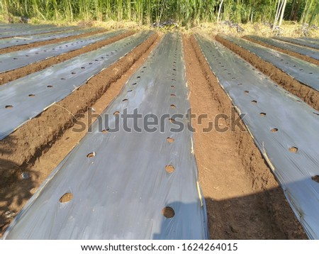 nursery farming system is a farming system or method used by many mountainous farmers, making it quite easy only requires a hoe and several people to be able to build a row of land #1624264015