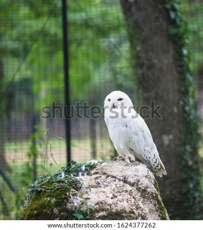 One white owl on stone in a zoo, vertical picture