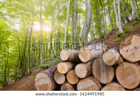 Forest alder and hornbeam trees. Log trunks pile in front of timber, the logging timber wood industry. Wide banner of wooden trunks. Collage photo #1624491985
