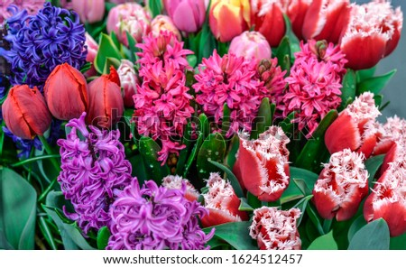 Colourful arrangement of fresh spring flowers with tulips and hyacinths.  Spring bulb flower.