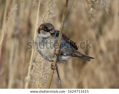Birds in their natural habitat #1624711615