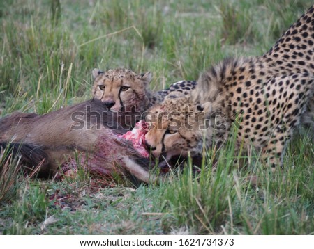 Animal kingdom and landscape in Tanzania and Kenya  #1624734373