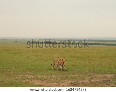 Animal kingdom and landscape in Tanzania and Kenya  #1624734379