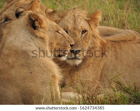 Animal kingdom and landscape in Tanzania and Kenya  #1624734385