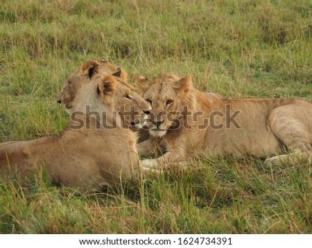 Animal kingdom and landscape in Tanzania and Kenya  #1624734391