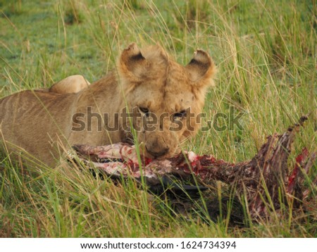 Animal kingdom and landscape in Tanzania and Kenya  #1624734394