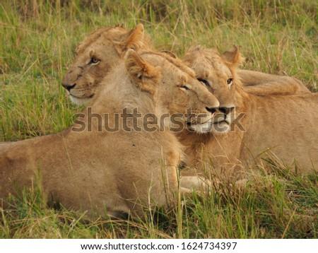 Animal kingdom and landscape in Tanzania and Kenya  #1624734397