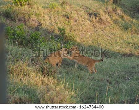 Animal kingdom and landscape in Tanzania and Kenya  #1624734400