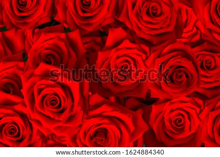 Red roses decorative bouquet background for decorative design. Invitation, greeting card. Flowers background. Valentines day.  #1624884340
