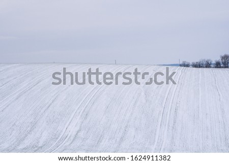 Wheat field covered with snow in winter season. Winter wheat. Green grass, lawn under the snow. Harvest in the cold. Growing grain crops for bread. Agriculture process with a crop cultures. #1624911382